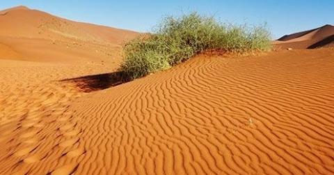 Deserto, strada della salvezza (Anna Maria Canopi OSB)