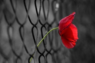 Speranza cercasi (Antonis Samarakis)