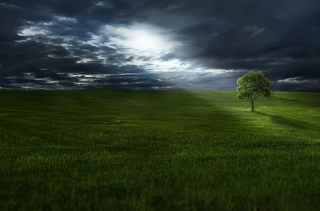 """""""Il canto della notte"""""""