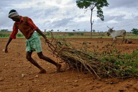 Agricoltura industriale e crisi idrica
