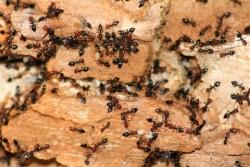 L'istante, Facebook ed il formicaio (Faustino Ferrari)