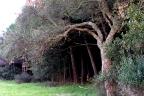 pineta e quercia