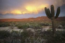 La spiritualità del deserto - La voce del silenzio (Gerolamo Fazzini)