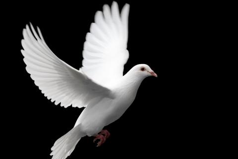 """""""Il Salvatore di pace"""""""